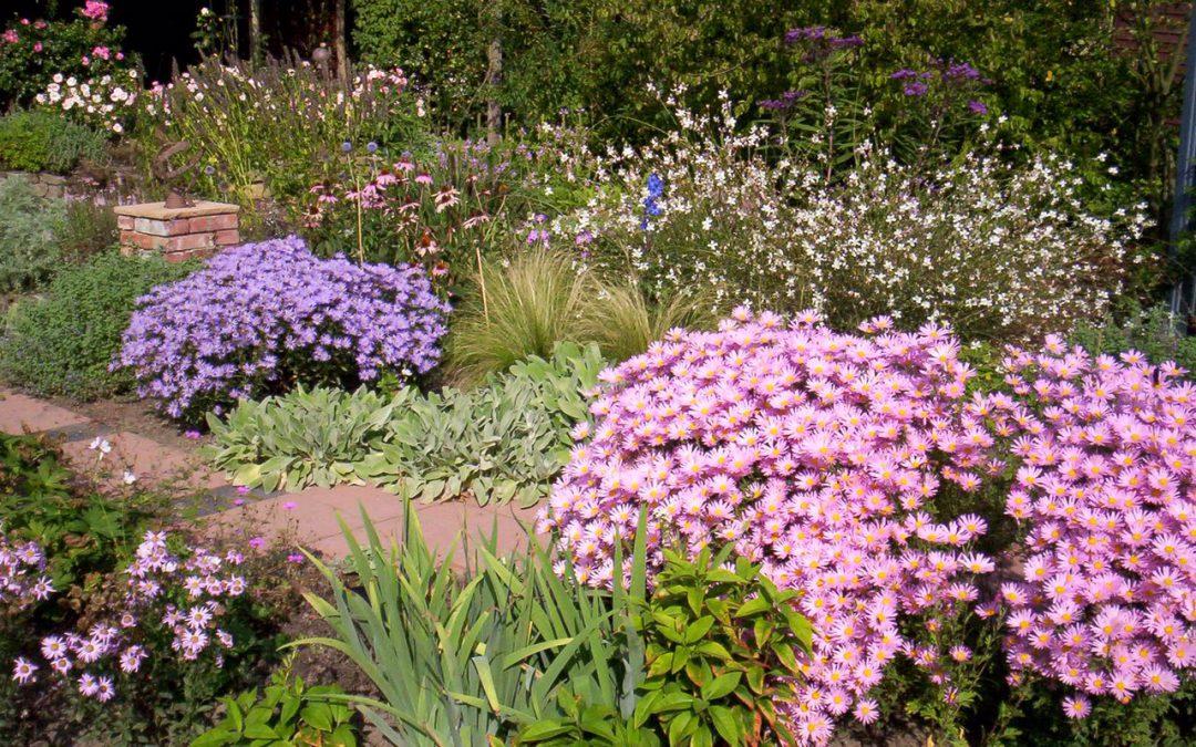 Vortrag zum Blühenden Vorgarten